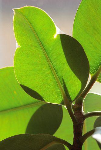 diese pflanzen eignen sich besonders f r ihr b ro. Black Bedroom Furniture Sets. Home Design Ideas