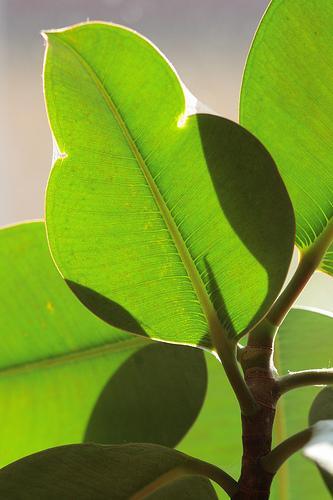 Diese Pflanzen Eignen Sich Besonders Fur Ihr Buro Buromobel Experte