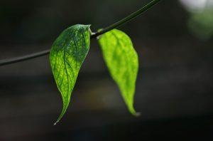 Pflanzen Luftfeuchtigkeit Büro
