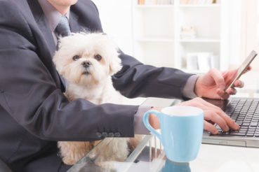 Mitunter kann es Wochen dauern, bis der Hund von allen Mitarbeitern akzeptiert wird. / Foto: Monika Wisniewska / fotolia.com