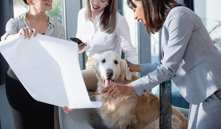 Bürohund - Vor- und Nachteile des neuen Trends / Foto: LIGHTFIELD STUDIOS / fotolia.com