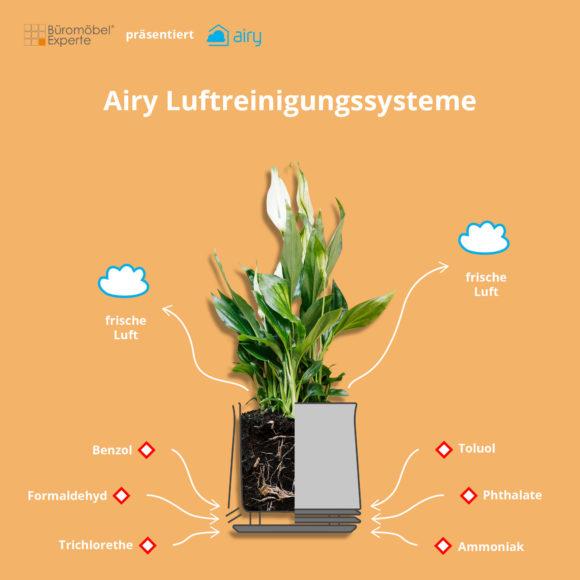 Luftreinigende Pflanzen fürs Büro - Top 5 4