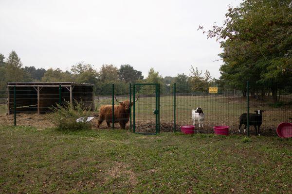 Büromöbel Experte unterwegs im Tierheim am See in Eisenhüttenstadt 9