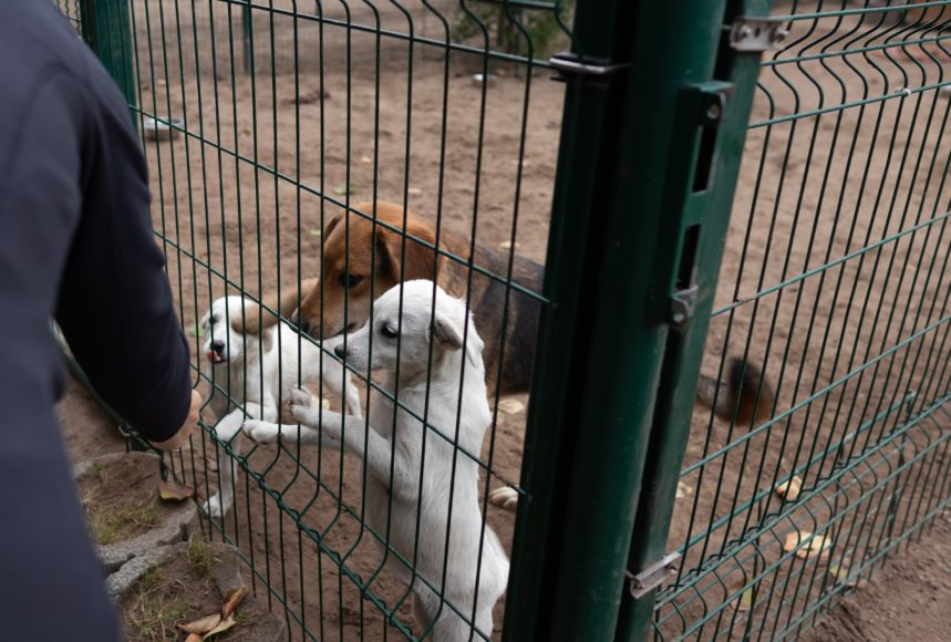 Büromöbel Experte unterwegs im Tierheim am See in Eisenhüttenstadt 7