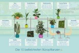 Top-10-Büropflanzen