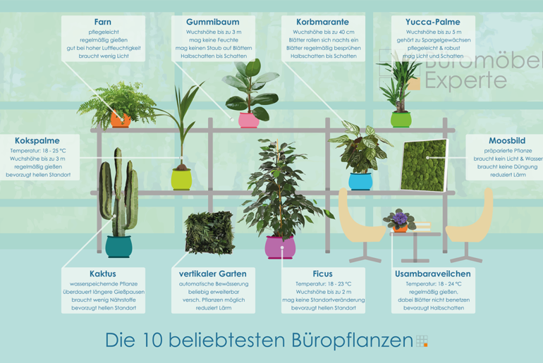 Top 10 Büropflanzen für bessere Luft