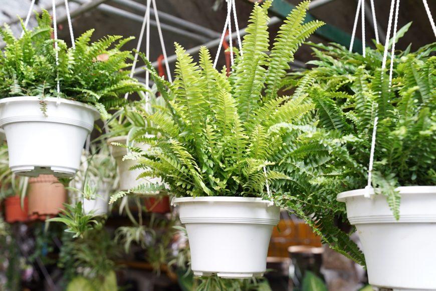 Luftreinigende Pflanzen fürs Büro - Top 5 1