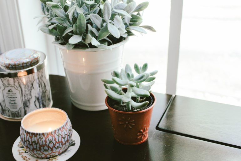 Luftreinigende Pflanzen: Pflanzen geben ein gutes Gefühl und helfen bei der Luftregulierung am Arbeitsplatz