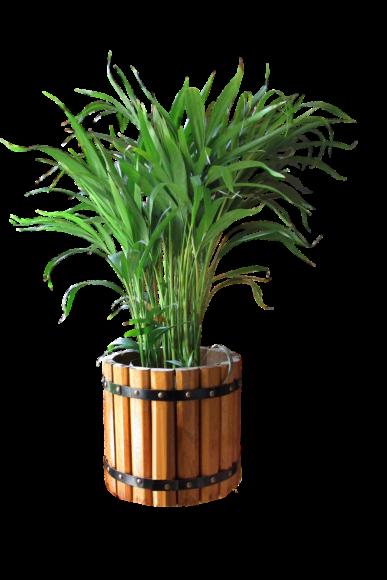 Luftreinigende Pflanzen fürs Büro: Palmen