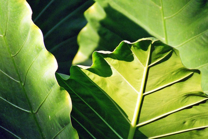 Luftreinigende Pflanzen fürs Büro - Top 5 2