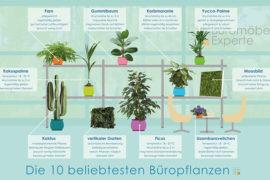 Top 10 Büropflanzen
